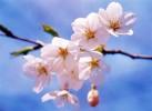 【太行山大峡谷】春暖花开季,带你云赏花